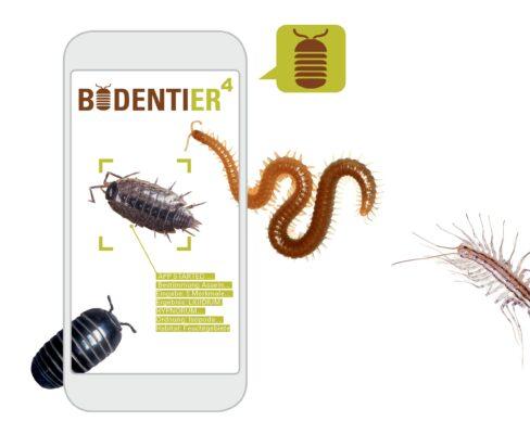 Bodentiere lassen sich mit dem Online-Portal BODENTIER hoch 4 richtig bestimmen